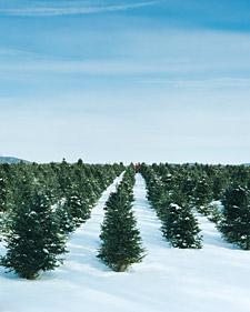 Treefarm