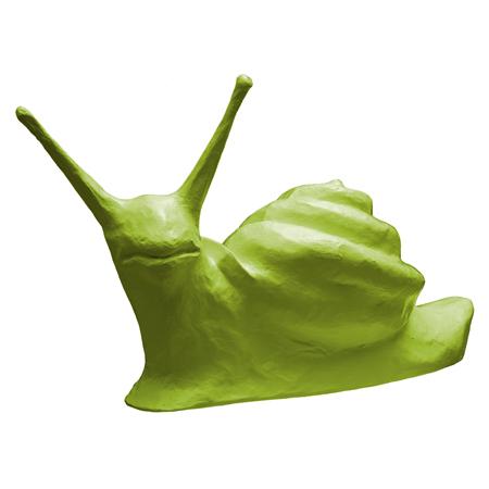 Snail-douglas-fir
